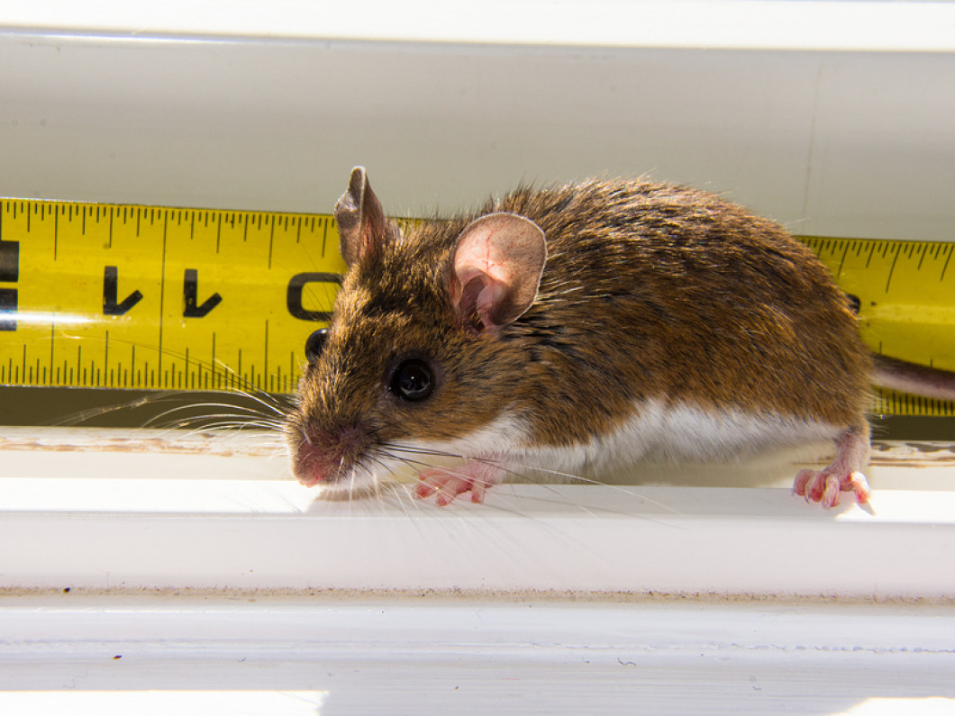 Are Rats Eating You Out of House and Home?